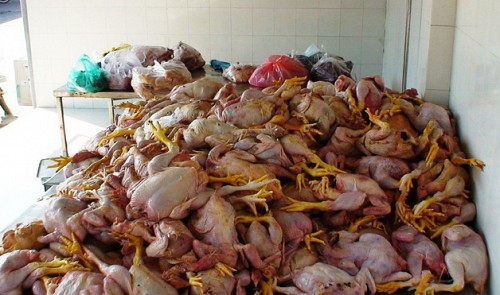 rotten chicken organs meant for humans seized society dong nai